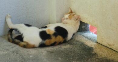 Tag des Nichtstuns: Eine schlafende Katze will nicht gestört werden