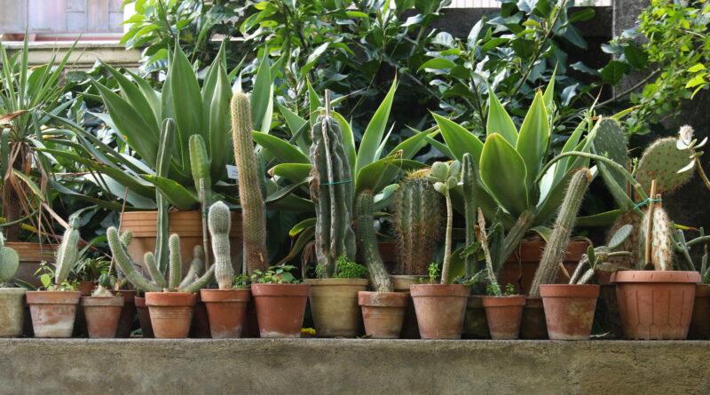 Zimmerpflanzen stehen aufgereiht in Töpfen auf einer Mauer.