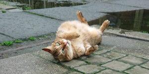 Eine Katze in Houtong