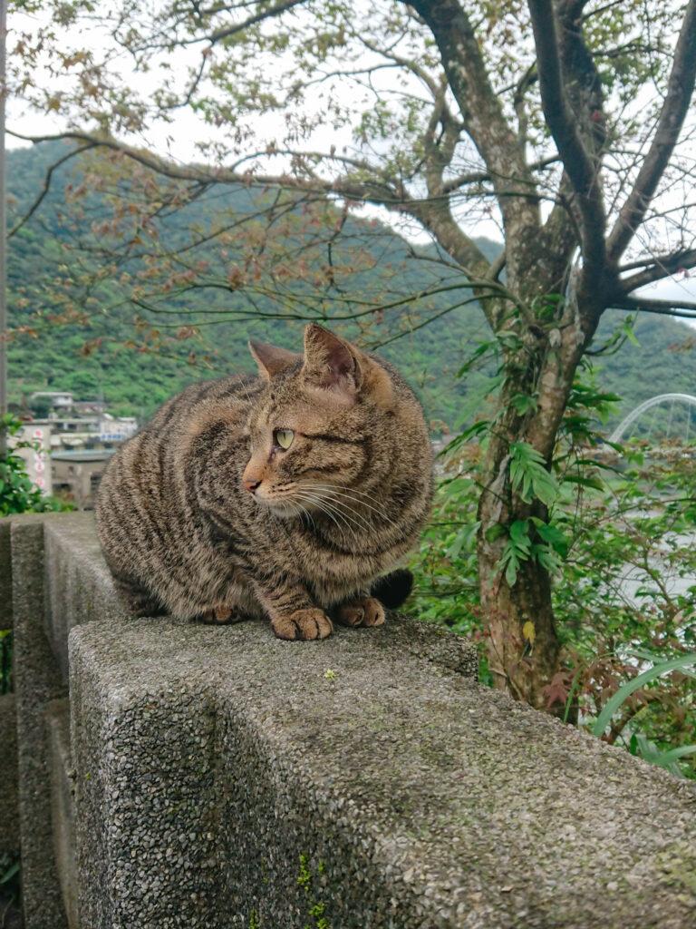 Eine Katze sitzt auf einer Mauer in Houtong