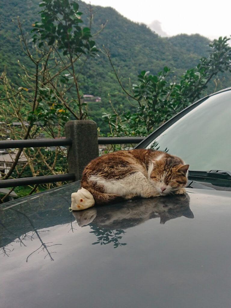 Katze liegt mit einem Kloß auf einem Auto