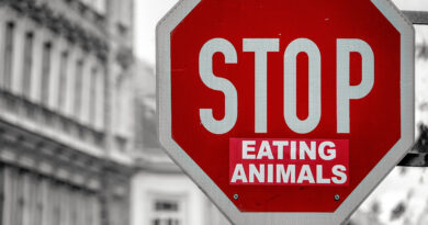 World Vegan Day: Stop Eating Animals