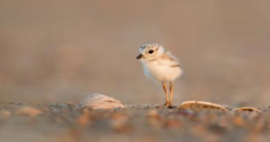 Ein Babyvogel für #FlauschTheCurve