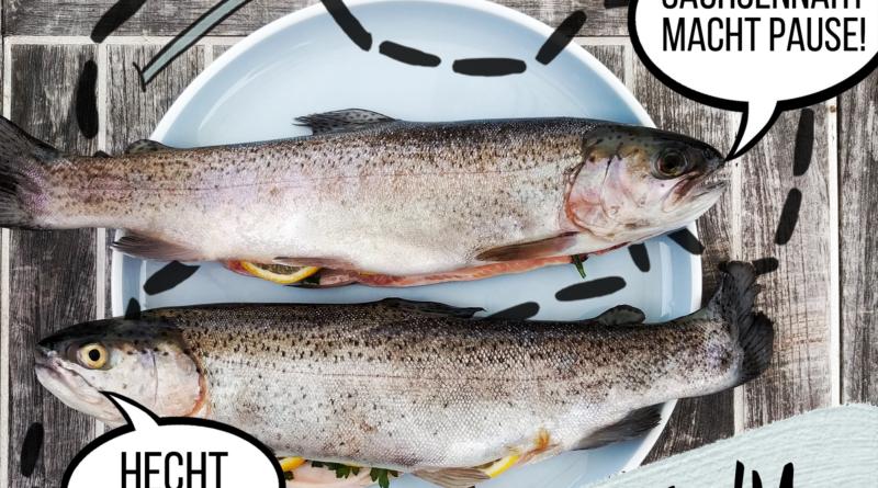 """Text& Grafik: Zwei Fische: """"Sachsennaht macht pause! Hecht jetzt?!"""" Folge 41"""
